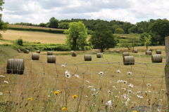 Bales in the Dale Stock Image