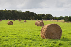 Bales of dry grass in the green field, Saint Cado, France Royalty Free Stock Image