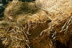 Bales of dry hay Stock Images