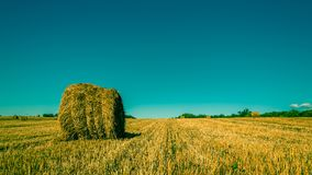 Bales of dry straw on an agricultural field under a clear blue sky. Summer agricultural landscape Royalty Free Stock Photos
