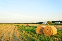 bales field золотистое сено круглое Стоковая Фотография