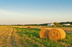 bales field золотистое сено круглое Стоковое Изображение