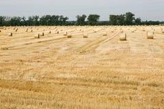 bales field сжатая сторновка Стоковая Фотография RF