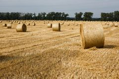 bales field сжатая сторновка Стоковое Фото