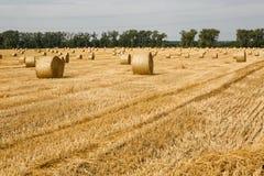 bales field сжатая сторновка Стоковое Изображение RF