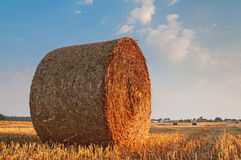 bales field сжатая сторновка Стоковые Изображения