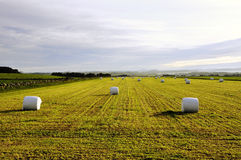 Bales in the field Stock Photo