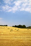Bales on the field royalty free stock photo