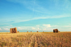 Bales at field Stock Photo