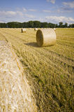 Bales on a field Stock Images