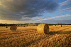 Bales in the field. August evening in the field with bales of straw Stock Photo