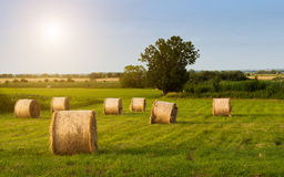 Bales on the field. Straw bales on the summer field Stock Photo