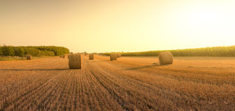 Bales on the field. Straw bales on the field sunset Royalty Free Stock Photography