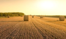 Bales on field. Bales on the summer field Stock Image