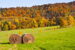 Hale bales in autumn madow. Bales of hale lying on the meadow with autumn colorful forest in the back Stock Photography