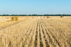 Bales on the harvested field Royalty Free Stock Images
