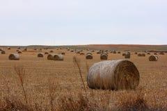 bales hay большой стоковое фото