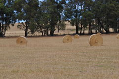 bales hay кругом Стоковые Фотографии RF