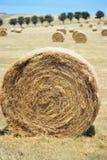 bales hay кругом Стоковые Изображения