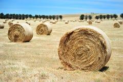 bales hay кругом Стоковое Изображение