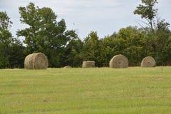 bales hay кругом Стоковое Изображение RF