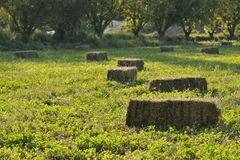 Bales of hay. In a countryside royalty free stock images