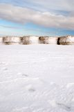 Bales of hay. Bale of hay covered by snow Stock Image