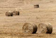 Bales of hay. Hay bales after harvest of wheat Stock Image