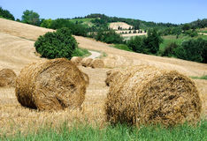 Bales of hay. Landscape of the hill with bales of hay Royalty Free Stock Photos