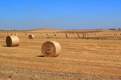 Bales of hay. In a large field royalty free stock photo