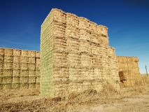 Bales of hay. Stock Images