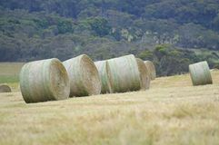 Bales of Hay. On rolling hills. Photo taken Dec 2013 Stock Images