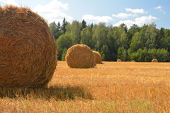 Bales of hay. Belarus. Royalty Free Stock Photography