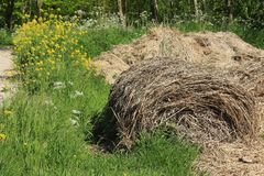 Blooming coleseed and cow parsley and bales of hay in the park in spring. The bales of hay with blooming coleseed and cow parsley are in the grassland of the royalty free stock photos
