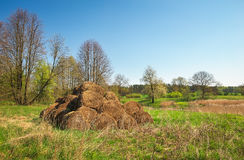 Bales of hay drying on the sunny field. Royalty Free Stock Photos