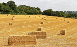 Bales of Hay in an english landscape. English Rural Landscape in the Chiltern Hills with Bales of hay Stock Photo