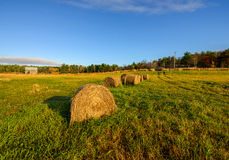 Bales of Hay in a Farm Field Stock Photo