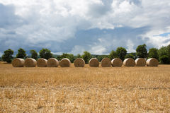 Bales of hay in the farm field in a row Royalty Free Stock Photography