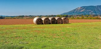 Bales hay in field. Bales of hay in field royalty free stock image
