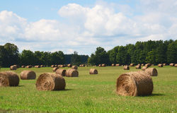 Bales of hay in field Stock Images