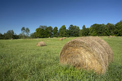 Bales of hay in field Stock Photo