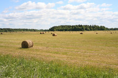 The bales of hay. On the field Stock Image
