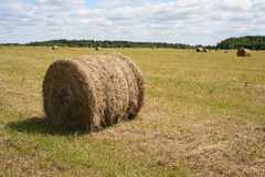 The bales of hay. On the field Royalty Free Stock Images