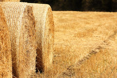 Bales of hay on the field Royalty Free Stock Photography