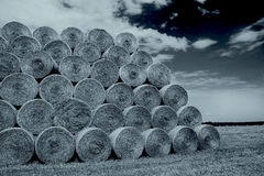 Bales of hay on the field Royalty Free Stock Image