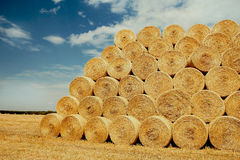 Bales of hay on the field Stock Image