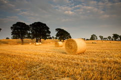 Bales of hay in a field Royalty Free Stock Image
