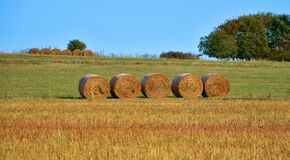 Bales of hay in field Royalty Free Stock Photo