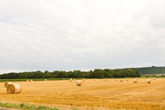 Bales of hay on the field Stock Photos