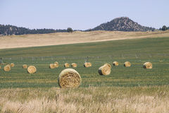 Bales of Hay in Field with Center Pivot Behind stock photo